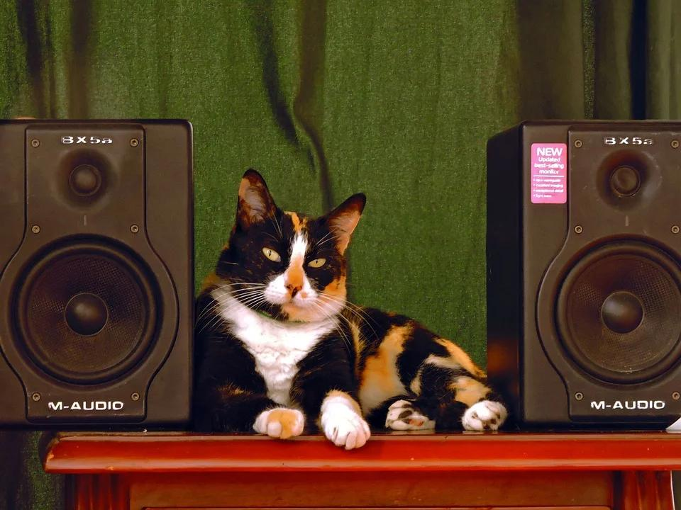 """Researchers have found that playing """"cat-specific"""" music can help calm and relax your cat."""