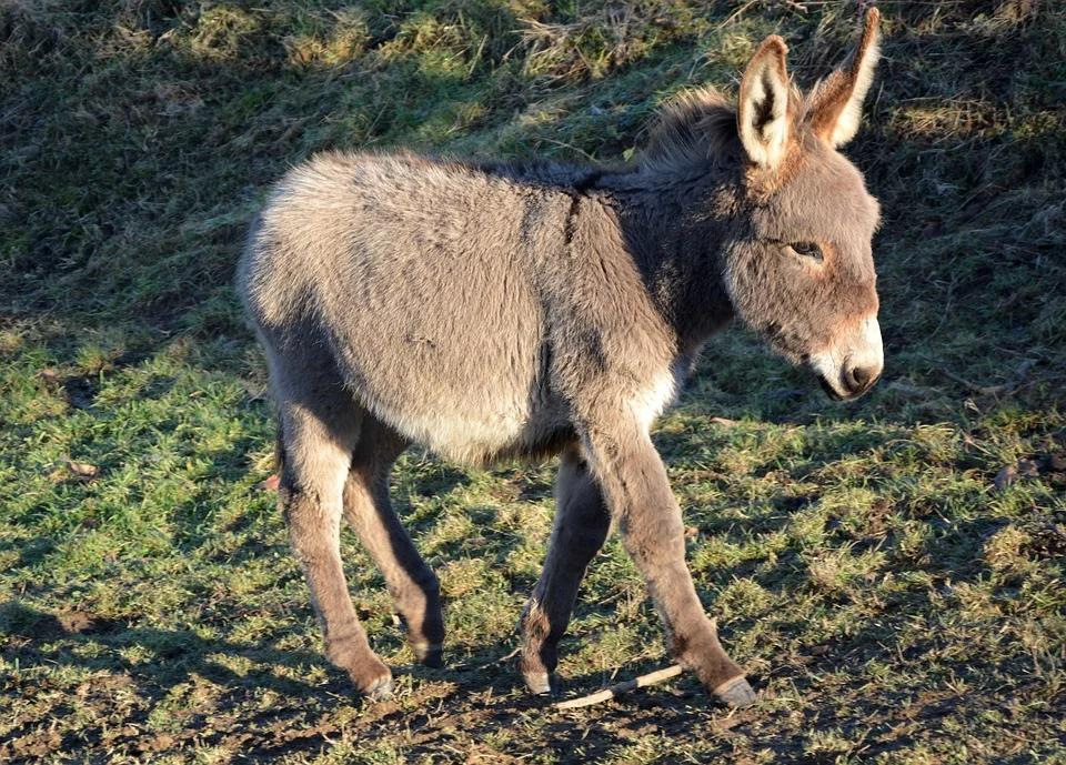 Archaeologists have found a Chinese noblewoman buried with her donkey so she could continue playing polo in the afterlife.