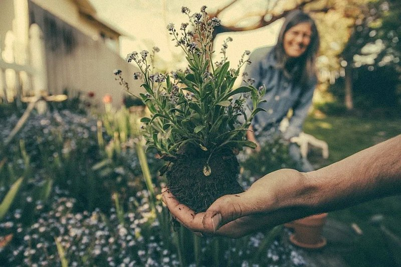 A study has found gardening can promote positive body image, including appreciation of one's own body and one's bodily imperfections.